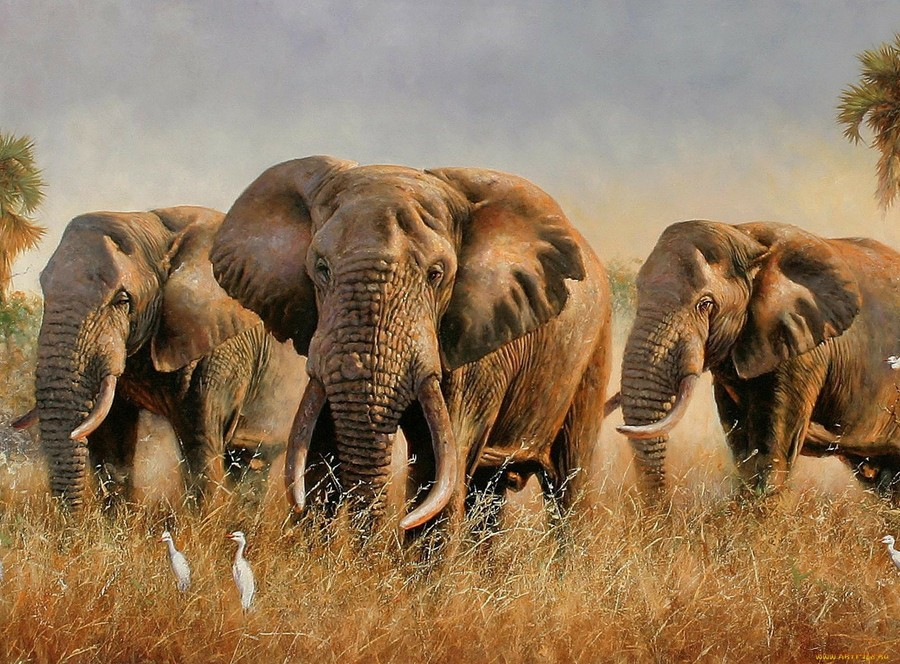 африканская саванна животные