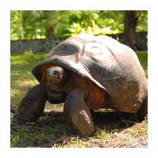 Отдых на Сейшельских островах предполагает знакомство с черепахами