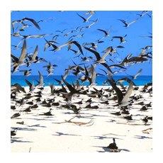 Птичий остров, один из Сейшельских островов на карте