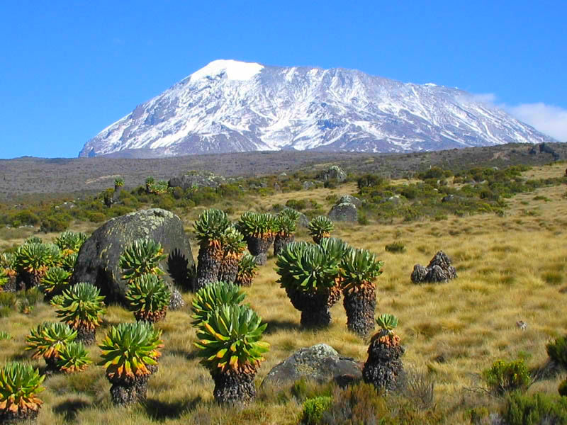 Fhdq images collection: kilimanjaro, by rolando soloman